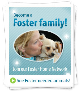 Become a Foster family! Join our Foster Home Network - See Foster needed animals!