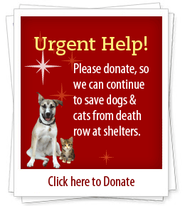 Urgent Help! Please donate, so we can continue to save dogs & cats from death row at shelters. Click here to Donate.