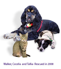 Walker, Cecelia and Tallia - Rescued in 2008