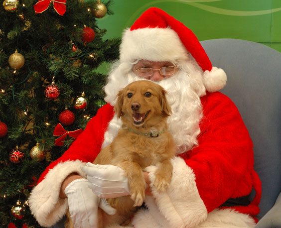 Events | Dec. 7th & 14th FFR, Pet Photo with Santa Paws ...