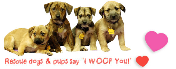 Rescue dogs says I WOOF You!