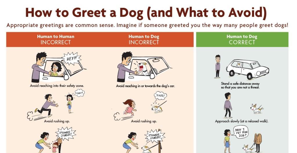 dogbitepreventionposter