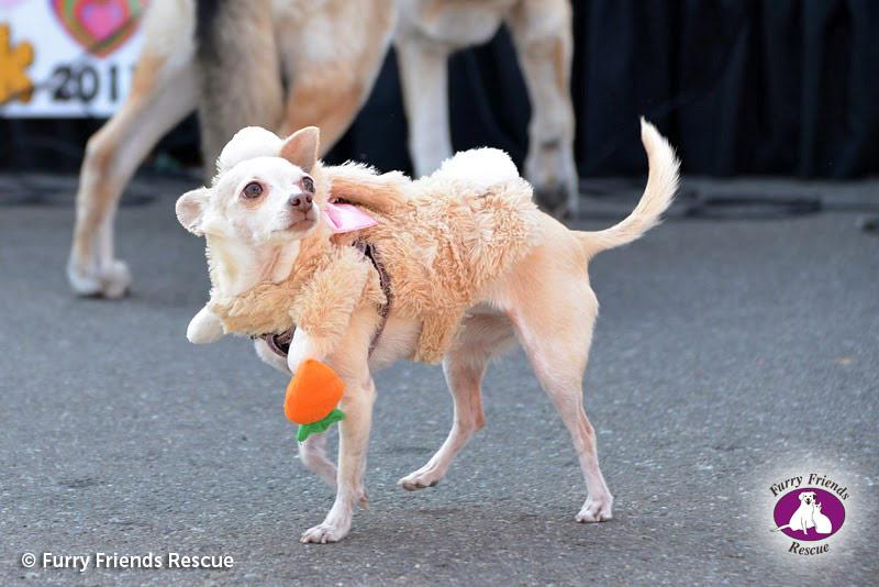 woofstock2013-dog-costume3