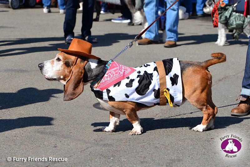 woofstock2013-dog-costume4