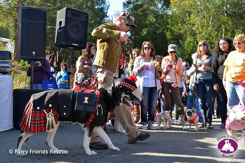 woofstock2013-dog-costume5