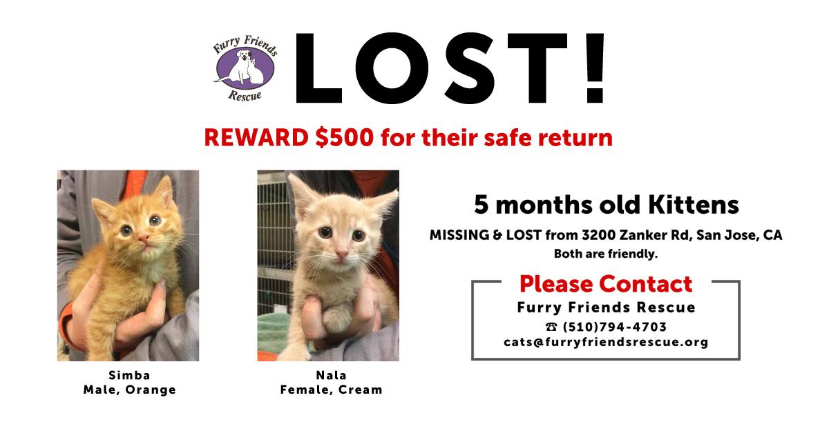 LOST Kittens $500 REWARD