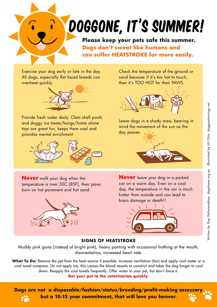 Doggone, it's summer! Pet safety tip poster by Lili Chin