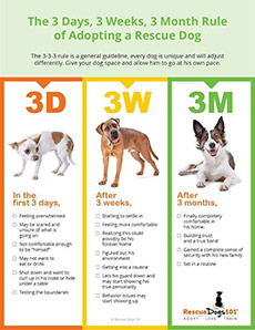 3-3-3 Rule for dogs