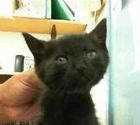 LARRY - ID#A102848
