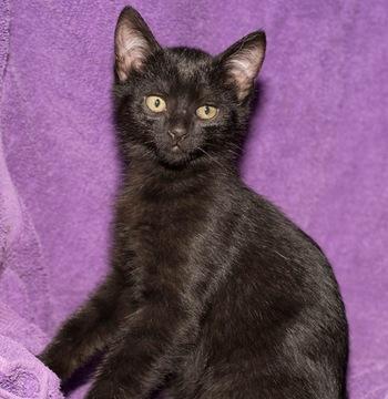 Kitten Companipn For Male Senior Cat