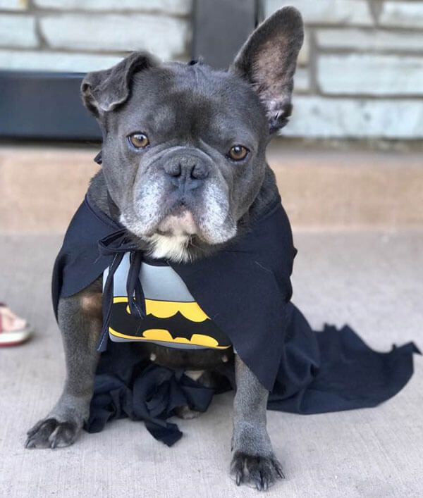 Jean Luc Bat Dog