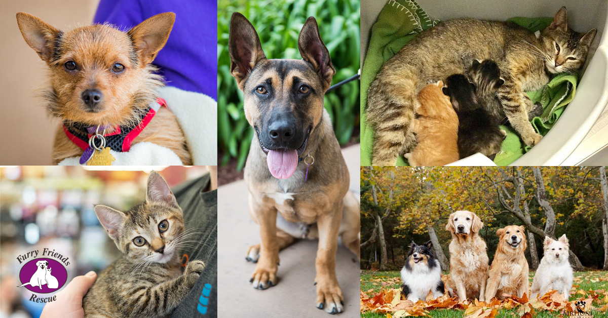 Home | Furry Friends Rescue - Dog & Cats Adoption, Fostering