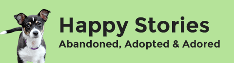 Tail Waggin - Happy Stories and Makeovers