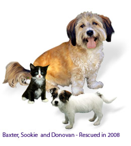 Baxter, Sookie and Donovan - Rescued in 2008