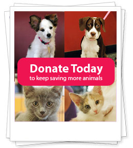 Donate TODAY, so we can continue to save dogs & cats from death row at shelters. Click here to Donate.