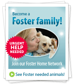 Become a Foster family! Join our Foster Home Network